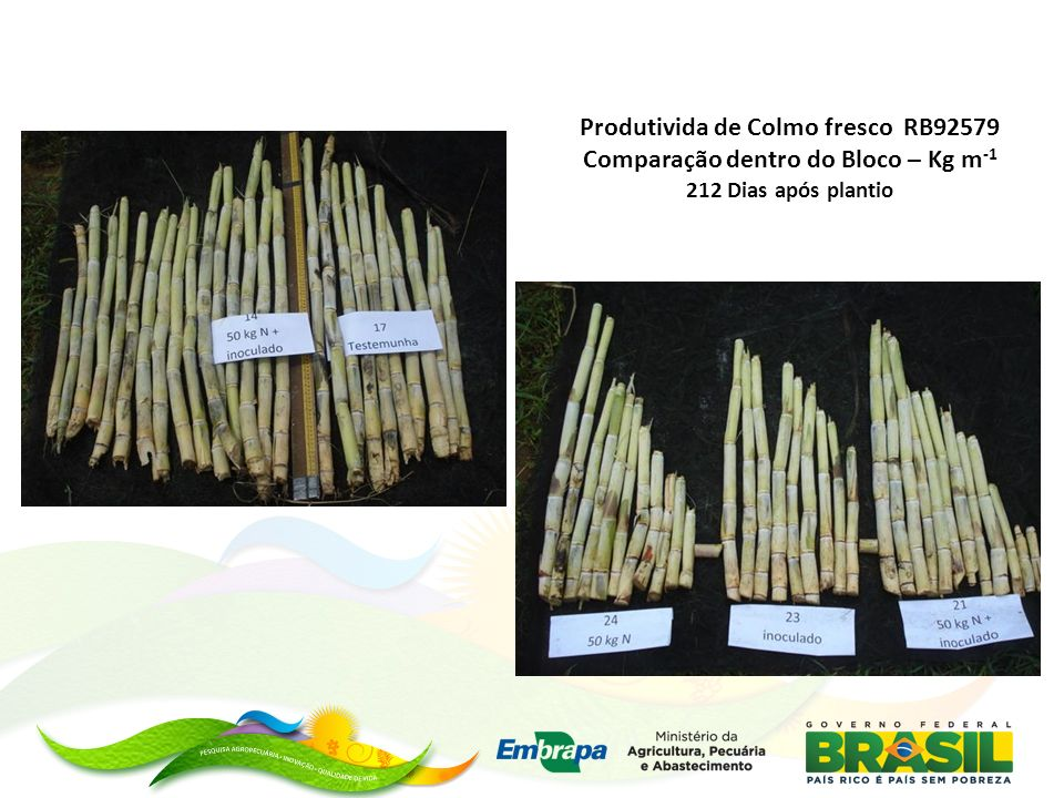 Produtivida de Colmo fresco RB92579 Comparação dentro do Bloco – Kg m -1 212 Dias após plantio