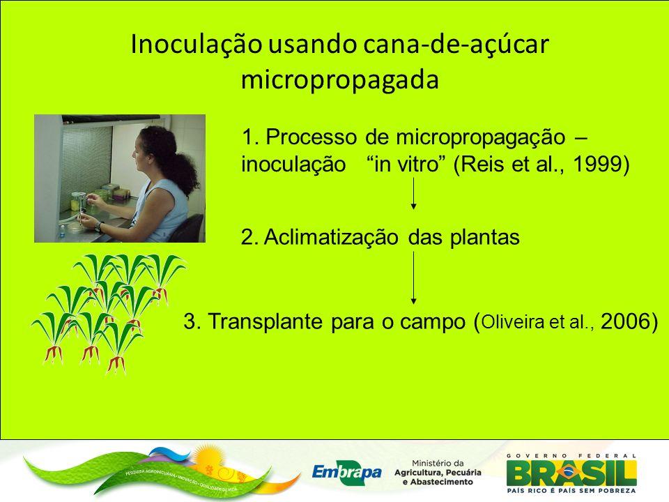 Inoculação usando cana-de-açúcar micropropagada 1.