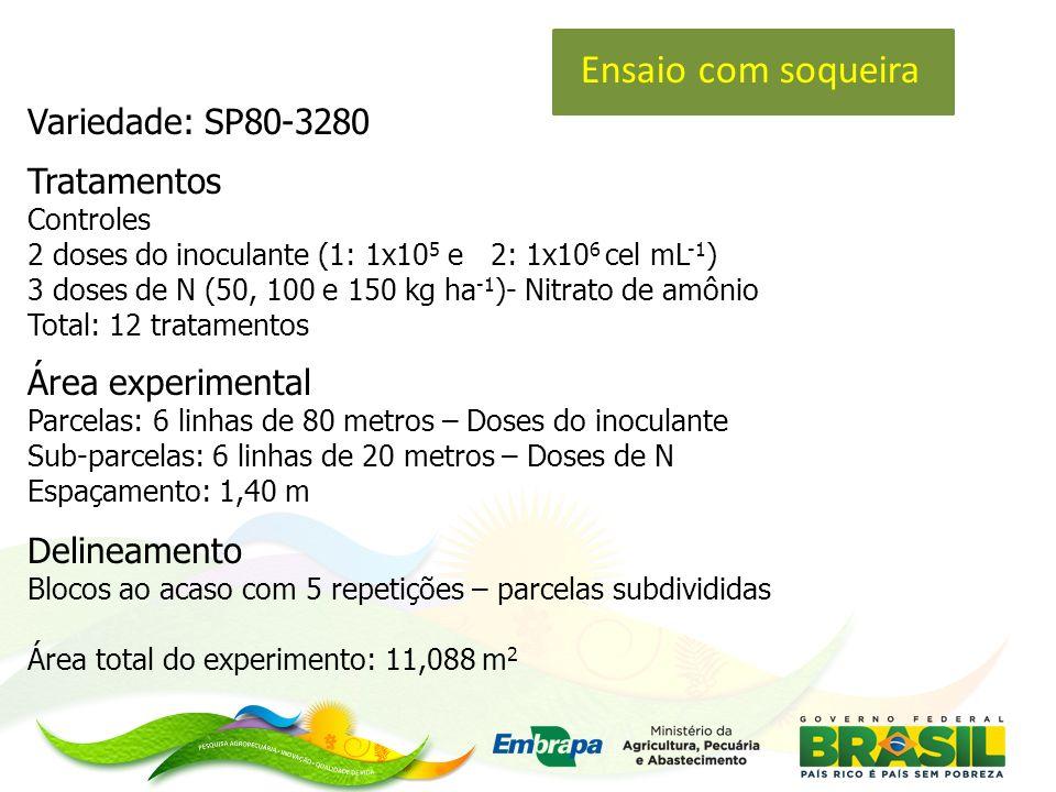 Variedade: SP80-3280 Tratamentos Controles 2 doses do inoculante (1: 1x10 5 e 2: 1x10 6 cel mL -1 ) 3 doses de N (50, 100 e 150 kg ha -1 )- Nitrato de amônio Total: 12 tratamentos Área experimental Parcelas: 6 linhas de 80 metros – Doses do inoculante Sub-parcelas: 6 linhas de 20 metros – Doses de N Espaçamento: 1,40 m Delineamento Blocos ao acaso com 5 repetições – parcelas subdivididas Área total do experimento: 11,088 m 2 Ensaio com soqueira