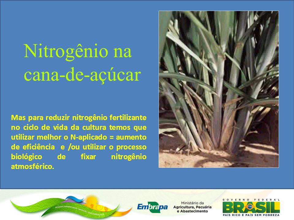Mas para reduzir nitrogênio fertilizante no ciclo de vida da cultura temos que utilizar melhor o N-aplicado = aumento de eficiência e /ou utilizar o processo biológico de fixar nitrogênio atmosférico.