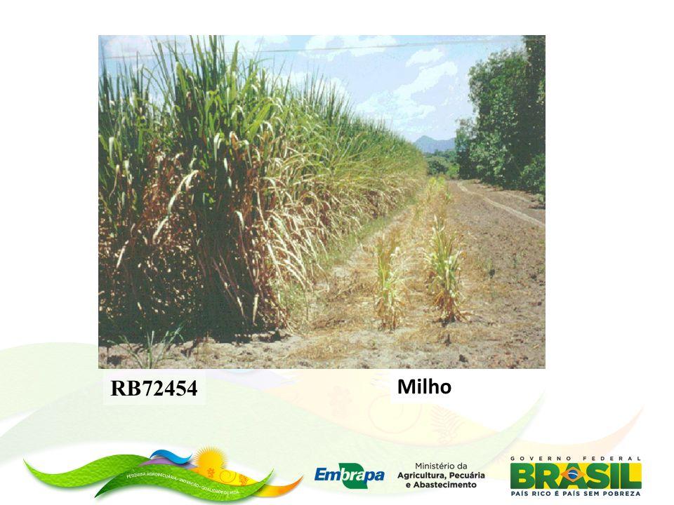 RB72454 Milho