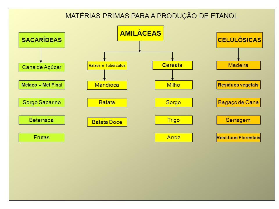 SACARÍDEAS AMILÁCEAS CELULÓSICAS Cana de Açúcar Batata Resíduos vegetaisMelaço – Mel Final Cereais Bagaço de Cana Beterraba Batata Doce Madeira Sorgo