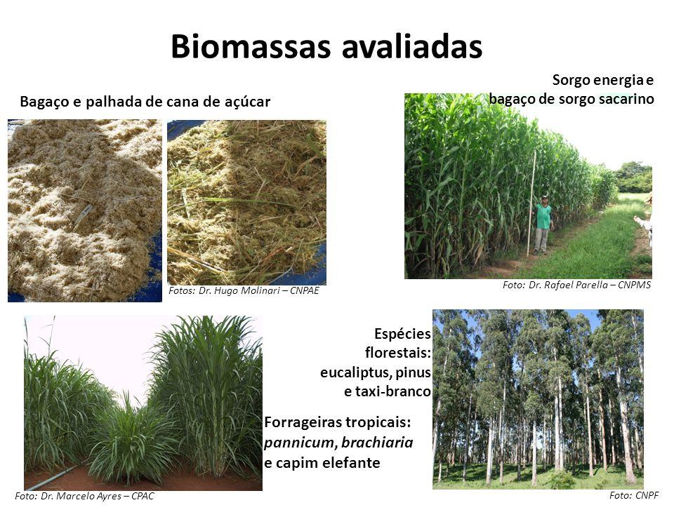Biomassas avaliadas Forrageiras tropicais: pannicum, brachiaria e capim elefante Sorgo energia e bagaço de sorgo sacarino Espécies florestais: eucalip