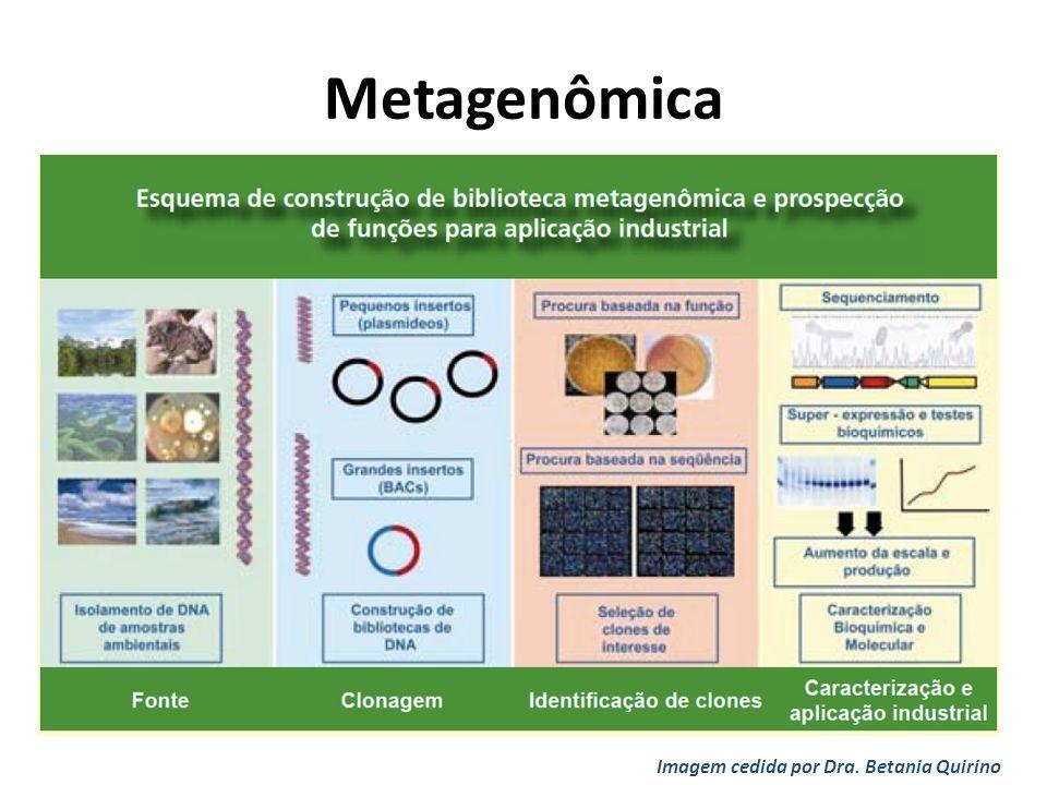 Imagem cedida por Dra. Betania Quirino Metagenômica