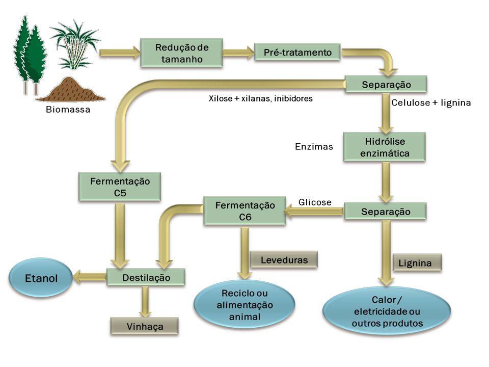 Plantas Matéria Prima Desconstrução Monômeros de açúcares Biocombustíveis Produção do etanol Microrganismos & Enzimas Lignina Hemiceluloses Celuloses DESENVOLVIMENTO DO ETANOL CELULÓSICO