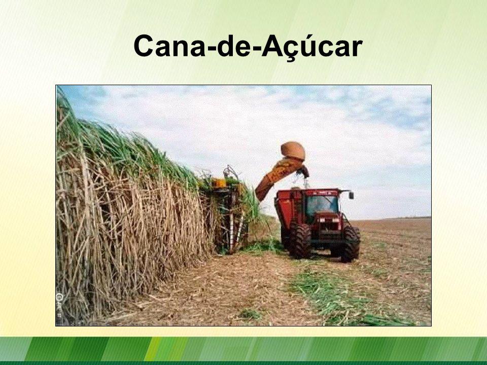 Evolução da Produção Brasileira de Cana-de-açúcar Fonte: MAPA