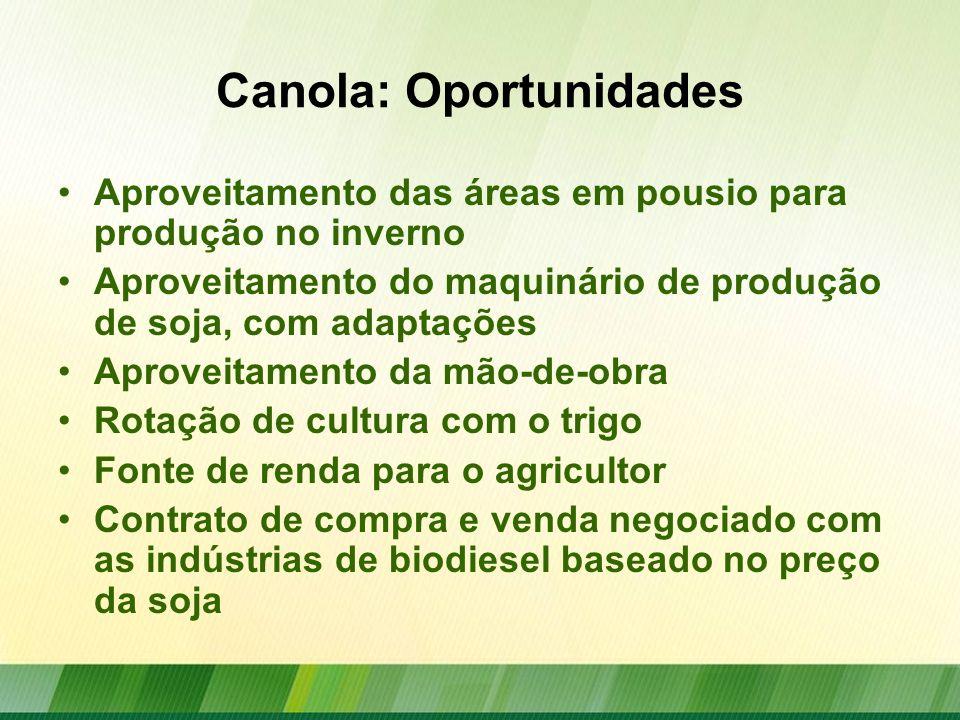 Canola: Desafios Crescimento da produtividade: –Média Brasil: 1249 kg/ha –Média Mundo: 1900 kg/ha Desenvolvimento de cultivares adaptadas para o Brasil: –Híbridos nacionais –Resistência à canela preta Apenas um defensivo registrado no MAPA