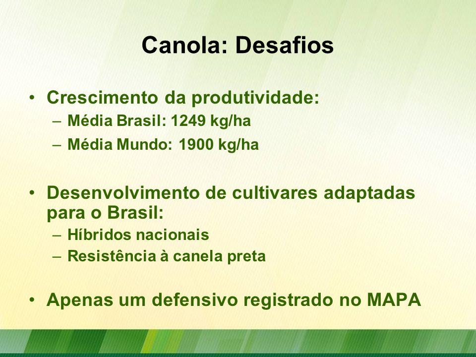 Projeto Estruturante de Canola para o Brasil Elaborado pela Embrapa Trigo Projeto estruturado em 10 planos de ação Duração: 48 meses, com início previsto para 2013 Estimativa de Orçamento: R$ 8 milhões
