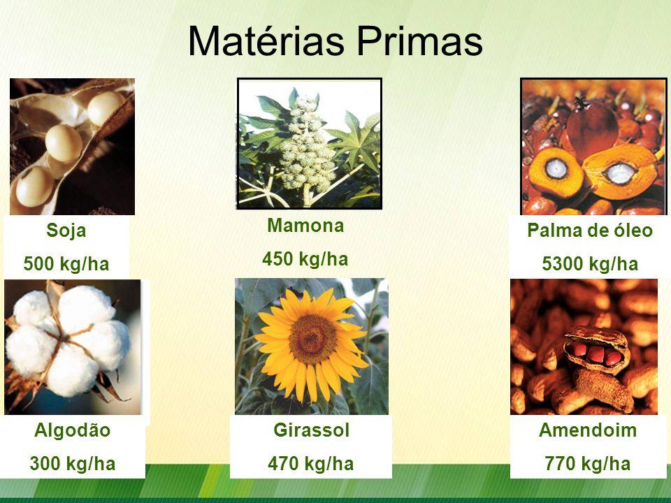 Outras Oleaginosa Potencias Pinhão Manso Macaúba Fevilha Babaçu