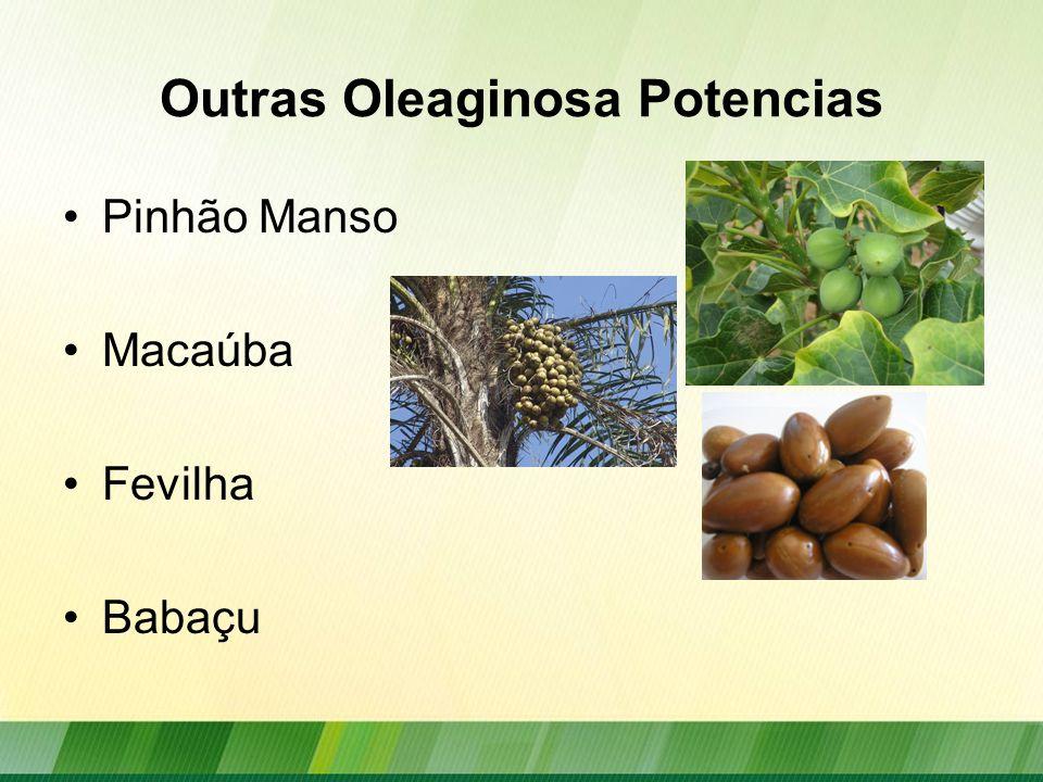 Oleaginosas: Produção Brasileira Fonte: Conab