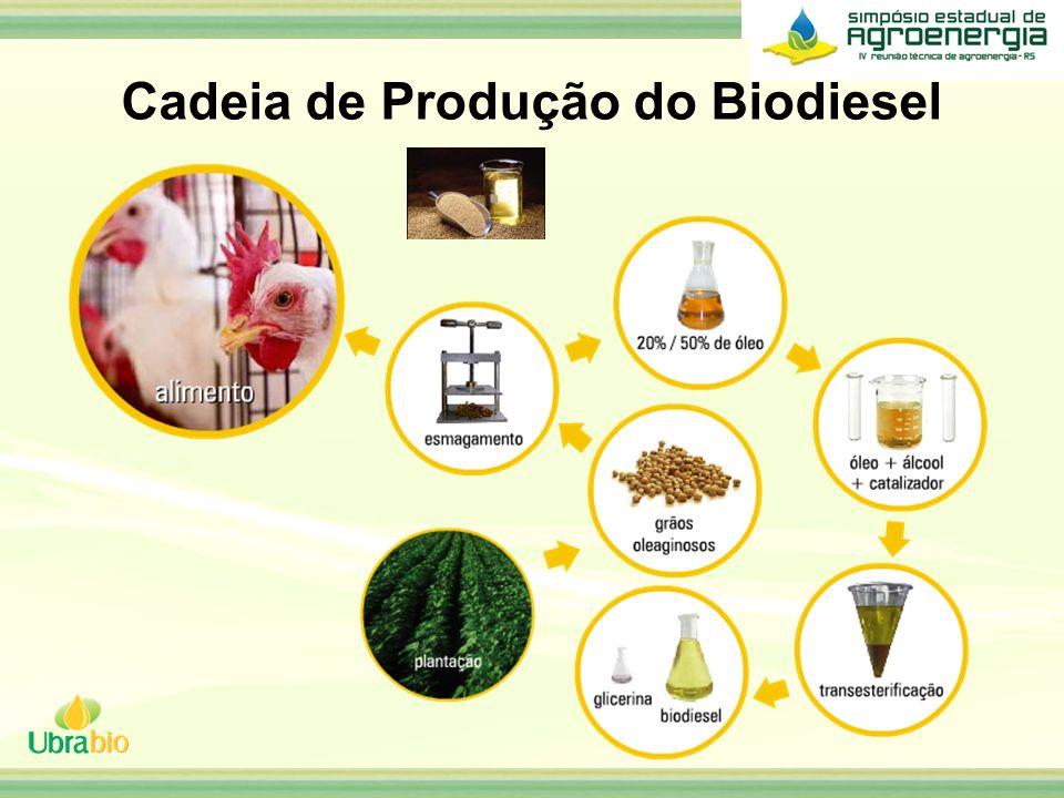 Cadeia de Produção do Biodiesel