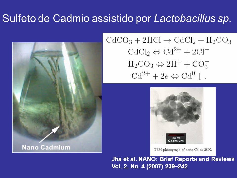 Sulfeto de Cadmio assistido por Lactobacillus sp. Jha et al. NANO: Brief Reports and Reviews Vol. 2, No. 4 (2007) 239–242