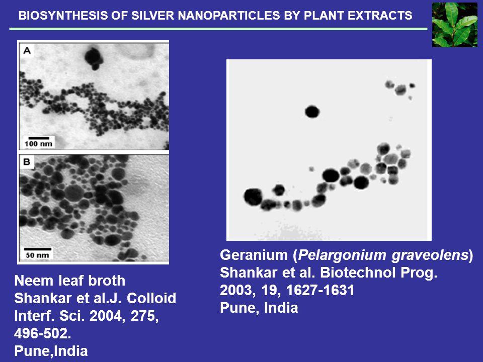 Geranium (Pelargonium graveolens) Shankar et al. Biotechnol Prog. 2003, 19, 1627-1631 Pune, India Neem leaf broth Shankar et al.J. Colloid Interf. Sci