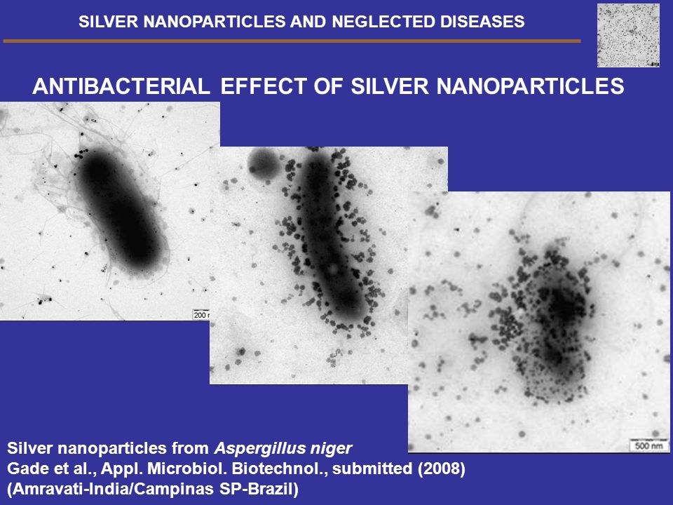 ANTIBACTERIAL EFFECT OF SILVER NANOPARTICLES Silver nanoparticles from Aspergillus niger Gade et al., Appl. Microbiol. Biotechnol., submitted (2008) (
