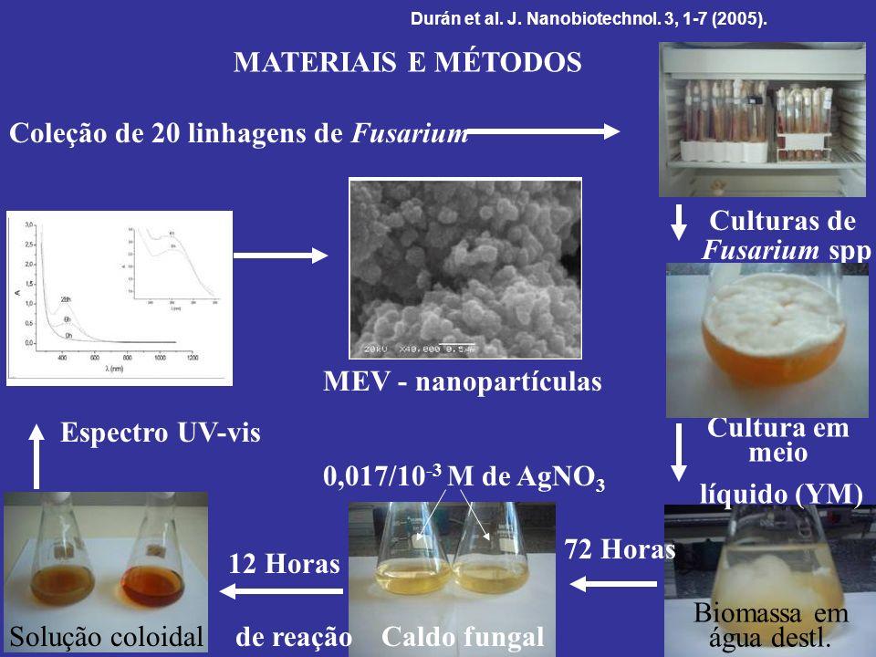 Coleção de 20 linhagens de Fusarium Culturas de Fusarium spp Cultura em meio líquido (YM) 0,017/10 -3 M de AgNO 3 Caldo fungal Biomassa em água destl.
