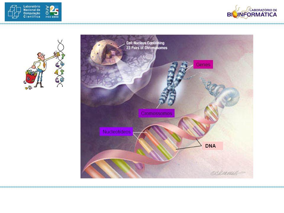 AnoFato 1871Descoberta dos ácidos nucléicos 1930Introdução da palavra genoma 1944DNA material genético em todos os seres vivos 1953Dupla hélice do DNA 1960sElucidação do código genético 1977Seqüenciamento do DNA 1986Seqüenciamento do DNA automatizado 1995Primeiro genoma de bactéria seqüenciado (Haemophilus influenza) 1999Primeiro cromossomo humano seqüenciado (cromossomo 22) 2000Genomas Drosophia / Arabidopsis / Xylella 2000Criação do LABINFO 2001Genomas humano e camundongo