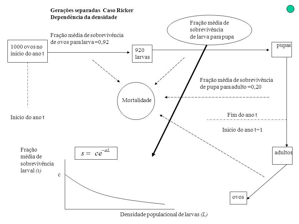 Gerações separadas Caso Ricker Dependência da densidade 1000 ovos no início do ano t Início do ano t Fração média de sobrevivência de ovos para larva