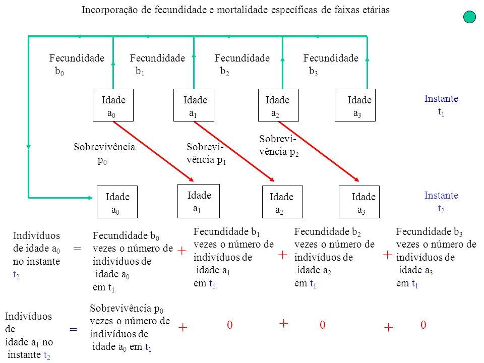 Incorporação de fecundidade e mortalidade específicas de faixas etárias Idade a 0 Idade a 1 Idade a 2 Idade a 3 Sobrevivência p 0 Sobrevi- vência p 2