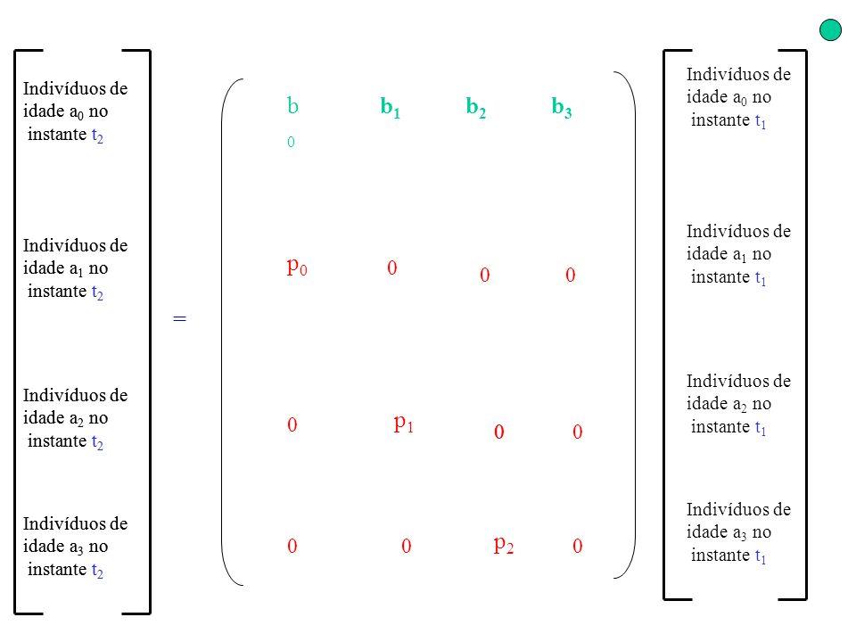 b2b2 b1b1 b3b3 p0p0 b0b0 p2p2 p1p1 0 0 0 0 0 0 0 0 00 = Indivíduos de idade a 0 no instante t 2 Indivíduos de idade a 1 no instante t 2 Indivíduos de