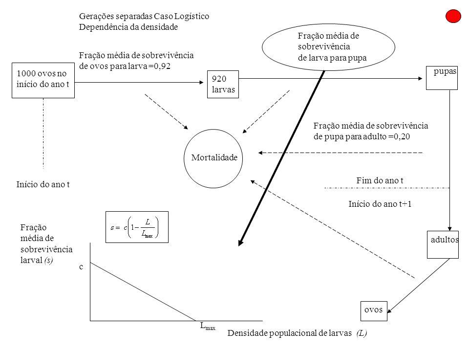 Gerações separadas Caso Logístico Dependência da densidade 1000 ovos no início do ano t Início do ano t Fração média de sobrevivência de ovos para lar