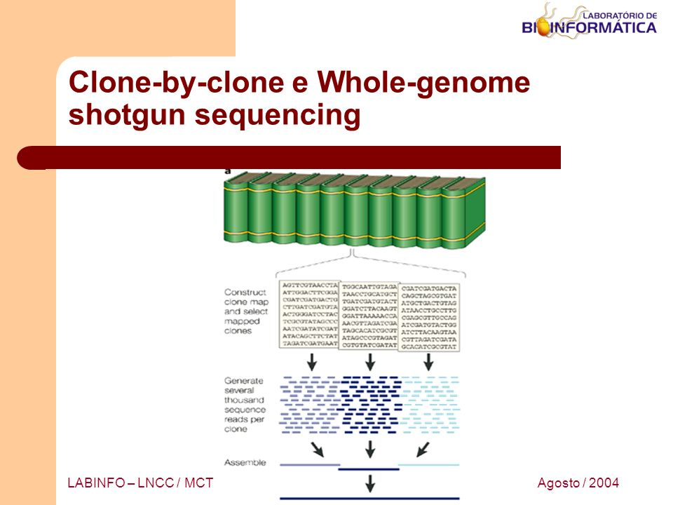 Agosto / 2004LABINFO – LNCC / MCT Whole-genome shotgun sequencing