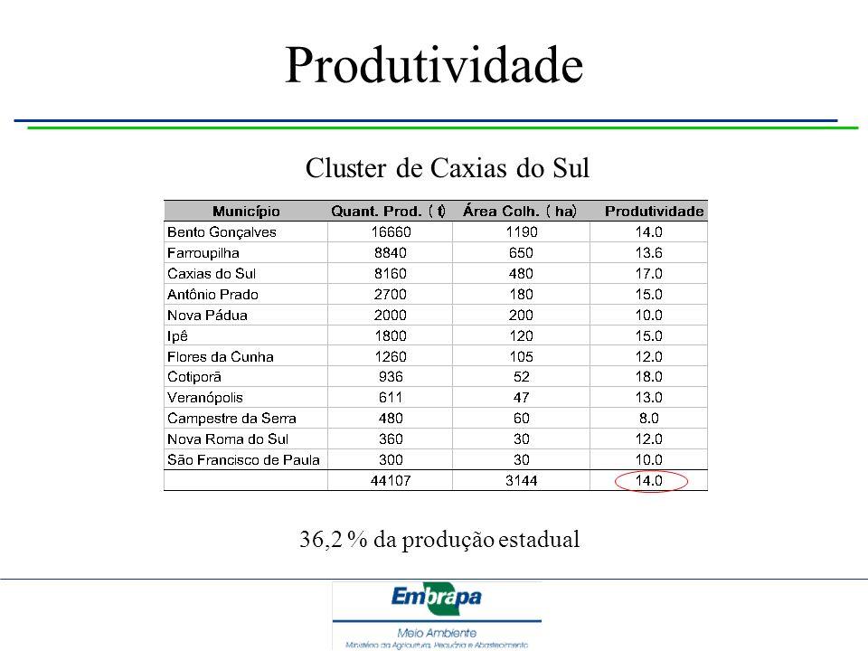 Cluster de Caxias do Sul 36,2 % da produção estadual Produtividade
