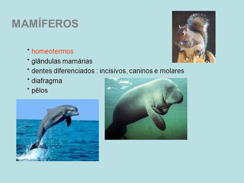 MAMÍFEROS * homeotermos * glândulas mamárias * dentes diferenciados : incisivos, caninos e molares * diafragma * pêlos