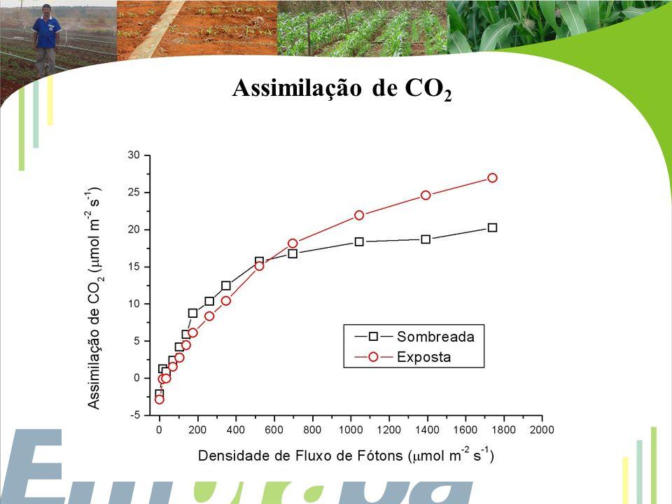 Assimilação de CO 2