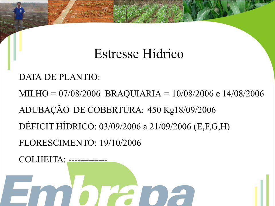 Estresse Hídrico DATA DE PLANTIO: MILHO = 07/08/2006 BRAQUIARIA = 10/08/2006 e 14/08/2006 ADUBAÇÃO DE COBERTURA: 450 Kg18/09/2006 DÉFICIT HÍDRICO: 03/