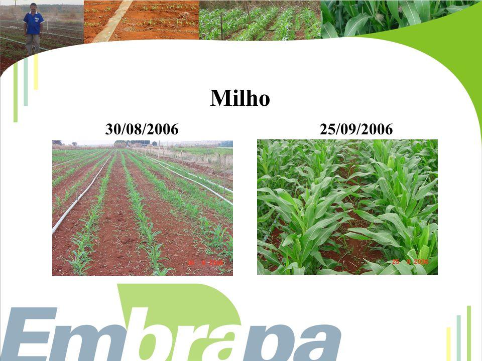 Milho 30/08/200625/09/2006