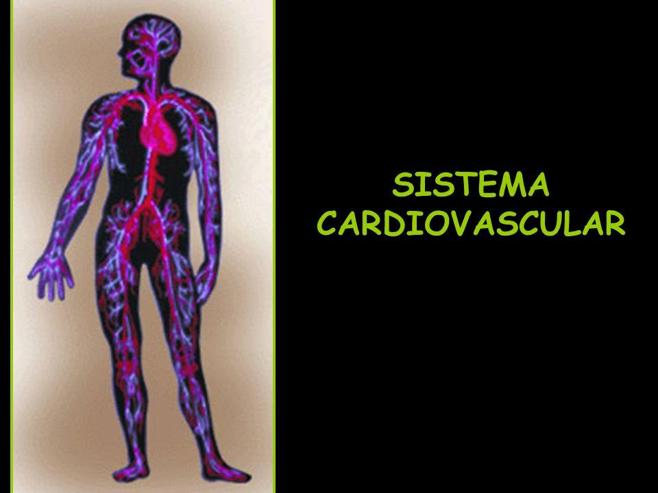 Coração -É um músculo envolto pelo pericárdio (membrana).