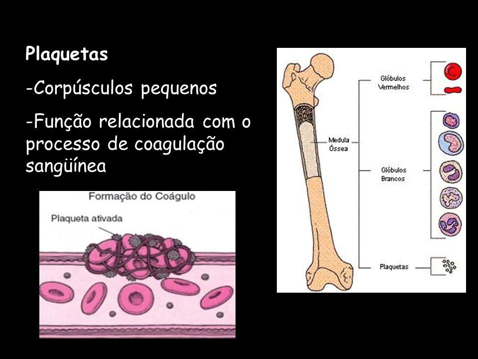 Plaquetas -Corpúsculos pequenos -Função relacionada com o processo de coagulação sangüínea