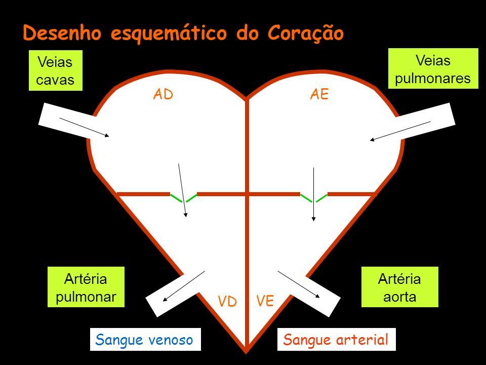Desenho esquemático do Coração ADAE VD VE Veias cavas Veias pulmonares Artéria pulmonar Artéria aorta Sangue venosoSangue arterial