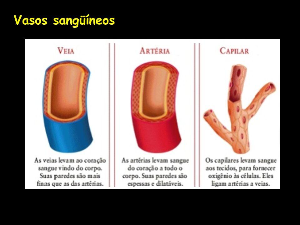 Vasos sangüíneos