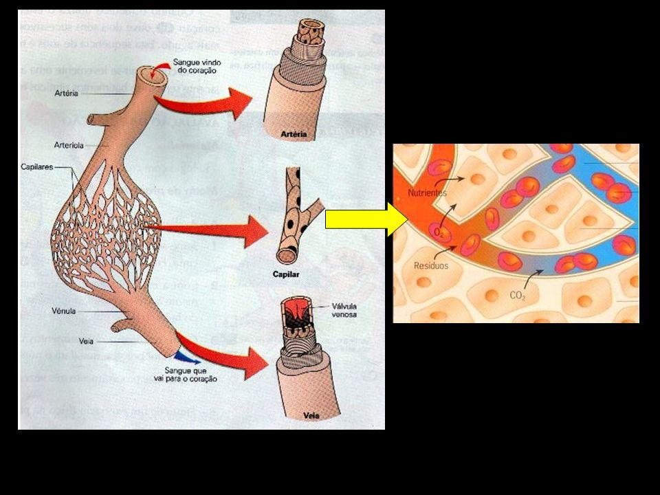 Como o sangue, quando sai do coração, atinge todas as células do corpo.