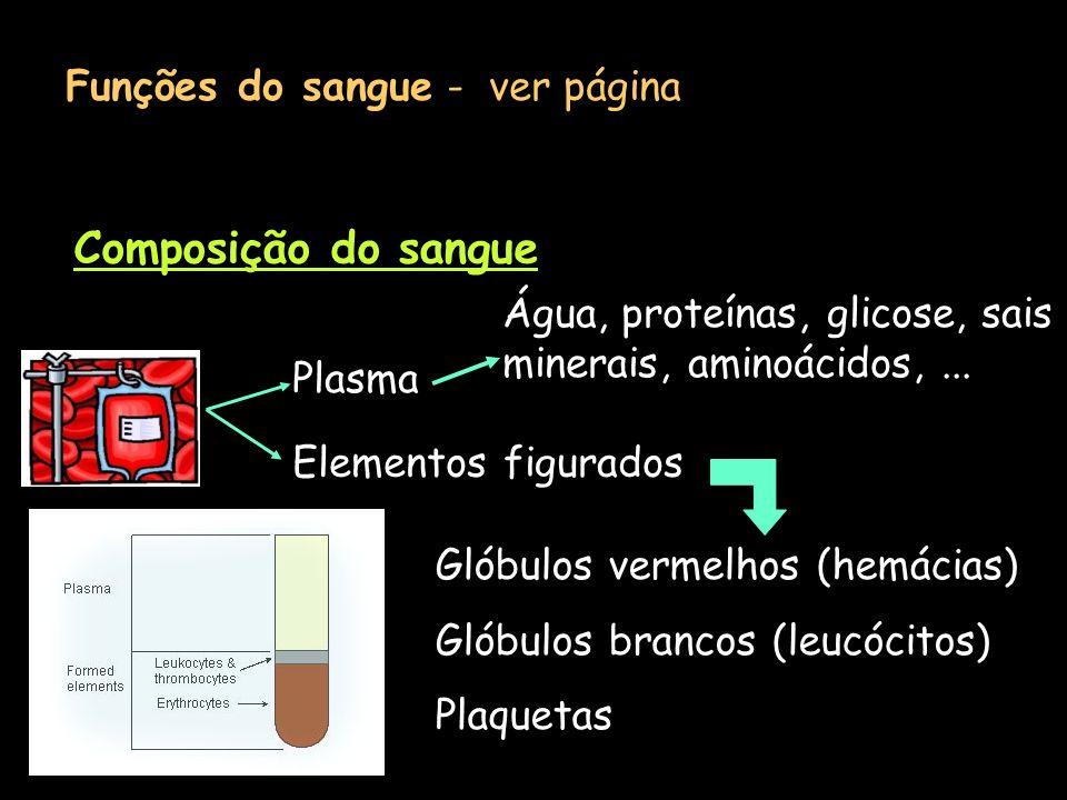 Funções do sangue - ver página Composição do sangue Plasma Elementos figurados Água, proteínas, glicose, sais minerais, aminoácidos,... Glóbulos verme