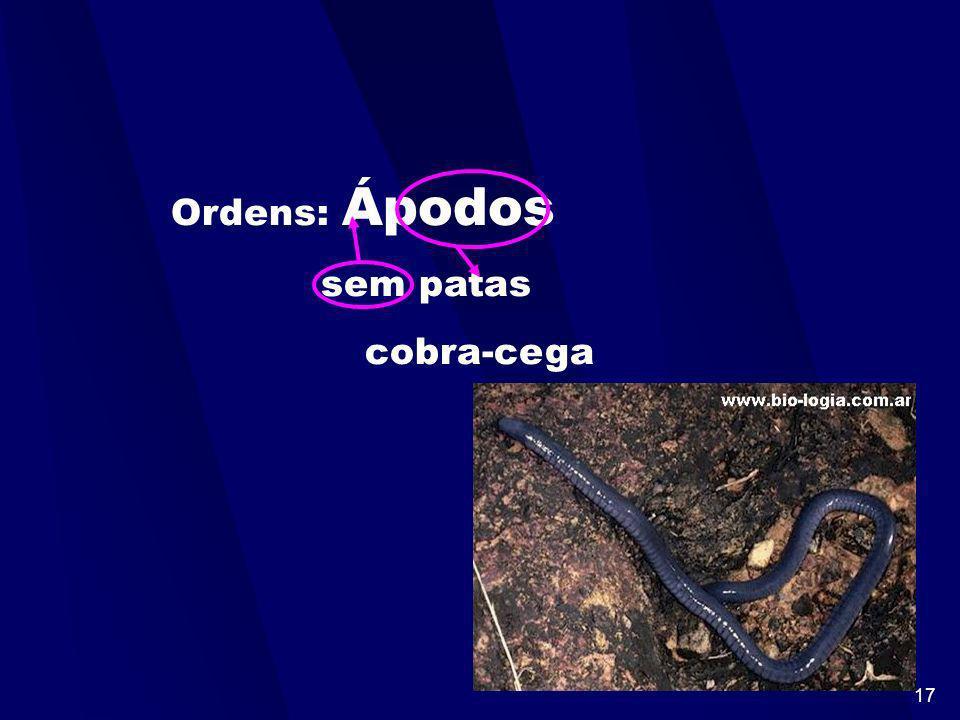 16 Classificação dos anfíbios -Dividem-se em 3 ordens: * Apoda : Corpo cilindrico e liso com pernas atrofiadas. Ex: cobras-cegas. *Urodela : Corpo dot