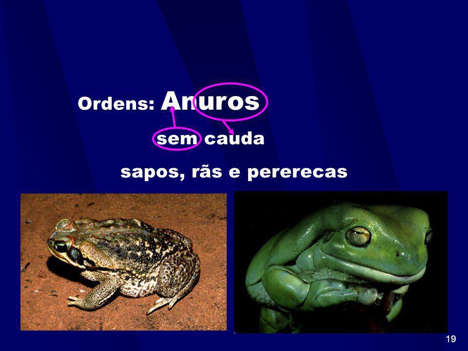 18 Ordens: Urodelos com cauda salamandras