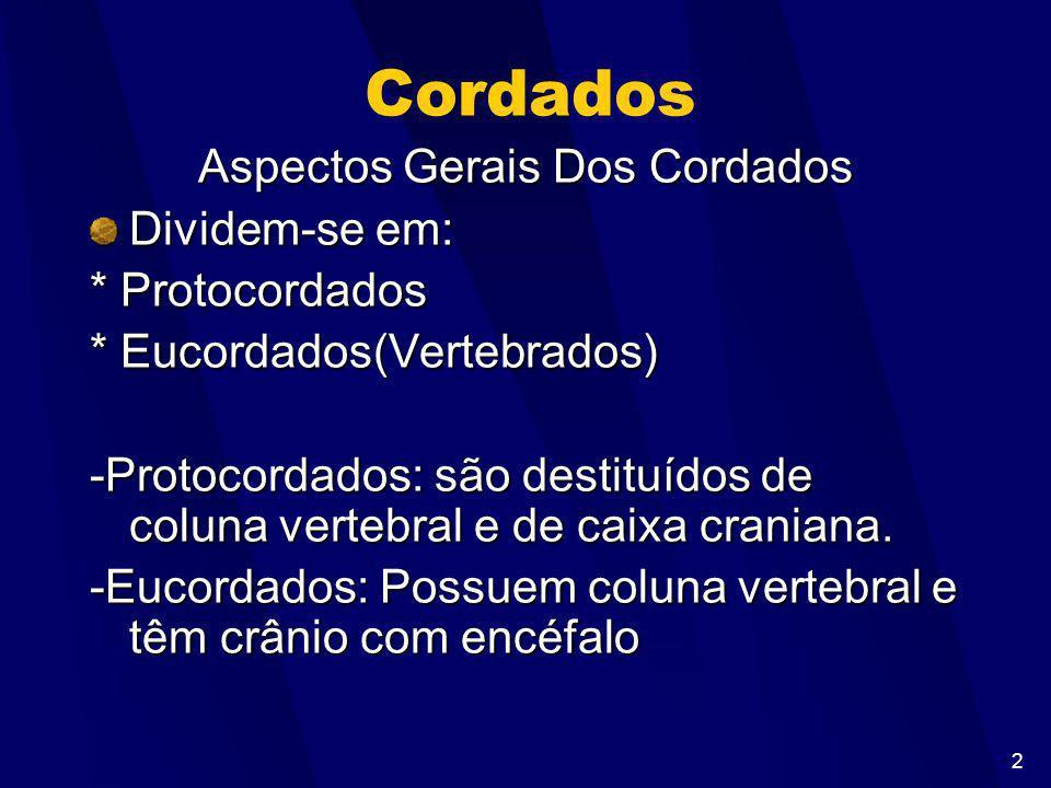 2 Cordados Aspectos Gerais Dos Cordados Dividem-se em: * Protocordados * Eucordados(Vertebrados) -Protocordados: são destituídos de coluna vertebral e de caixa craniana.