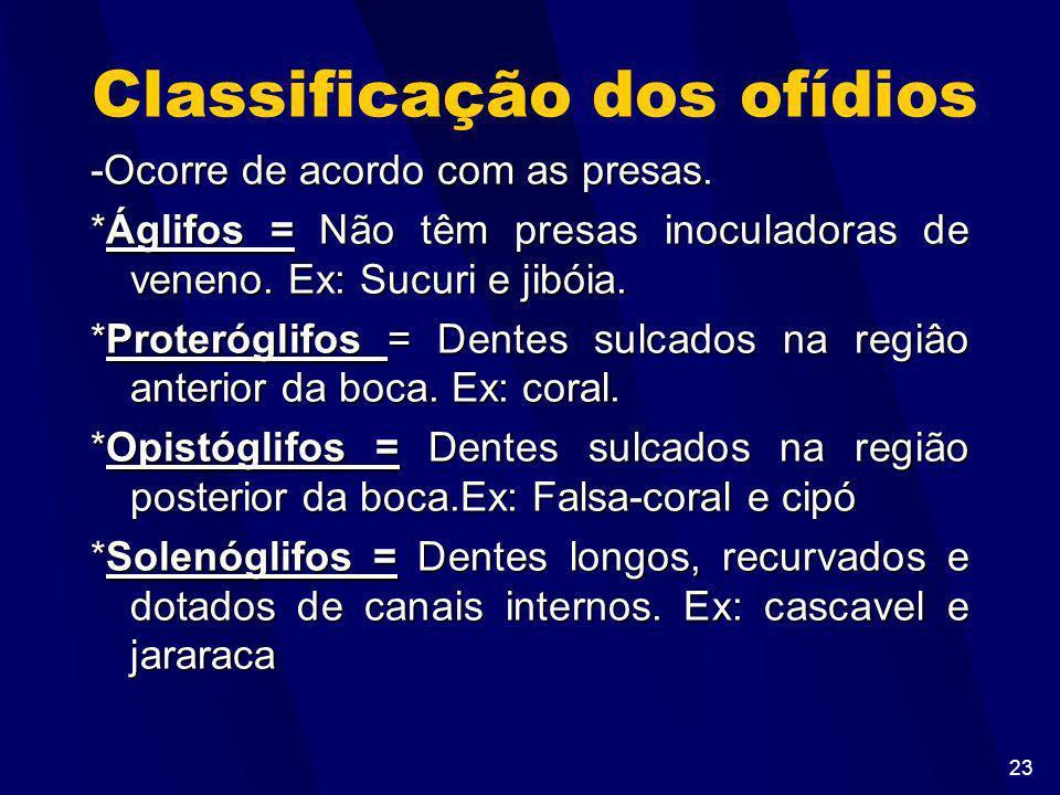 22 Classificação dos répteis As principais ordens são: *Squamata (lacertilhos e ofídios) -Lacertilhos(ou saurios) -Dotados de escamas córneas lisas -D