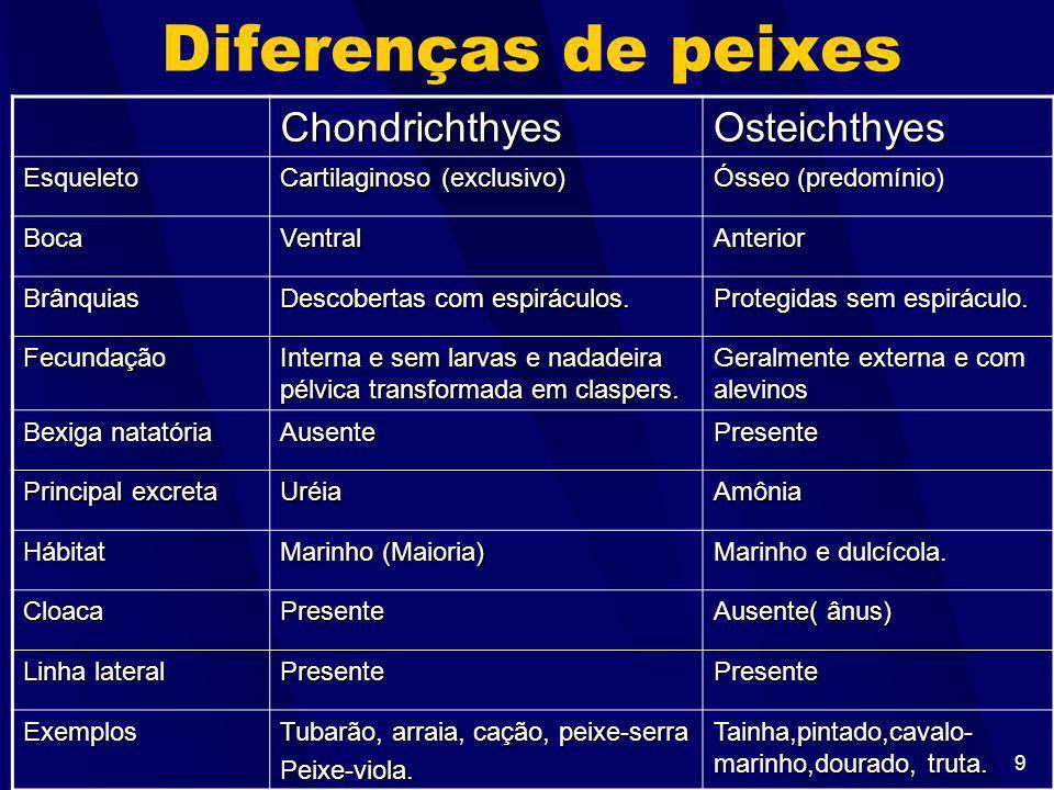 9 Diferenças de peixes ChondrichthyesOsteichthyes Esqueleto Cartilaginoso (exclusivo) Ósseo (predomínio) BocaVentralAnterior Brânquias Descobertas com espiráculos.