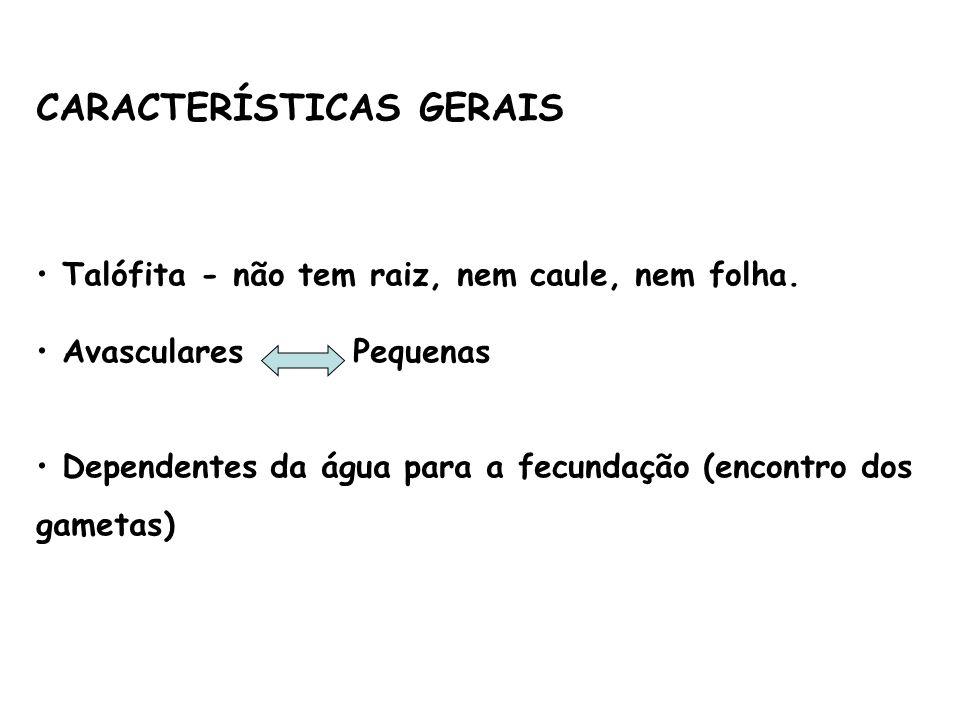CARACTERÍSTICAS GERAIS Talófita - não tem raiz, nem caule, nem folha. Avasculares Pequenas Dependentes da água para a fecundação (encontro dos gametas