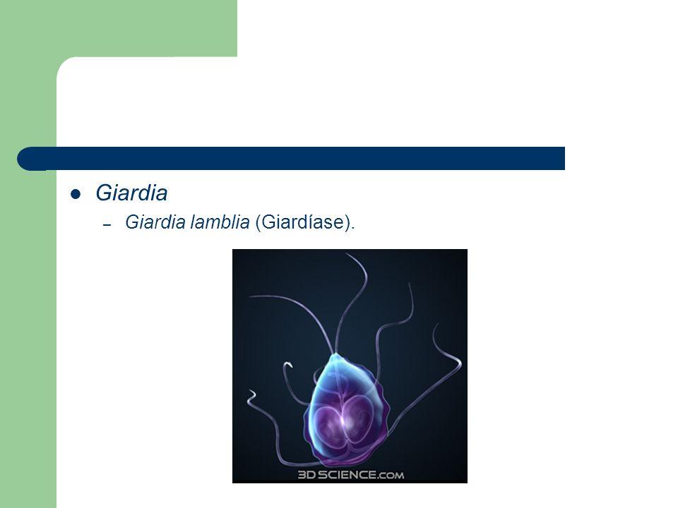 Giardia – Giardia lamblia (Giardíase).