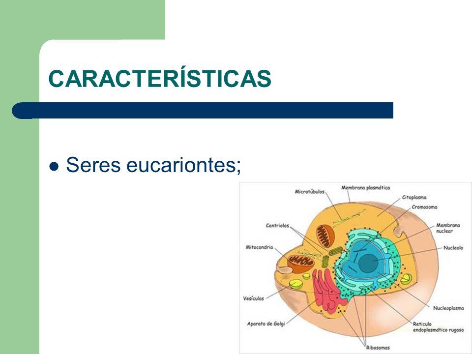CARACTERÍSTICAS Seres eucariontes;