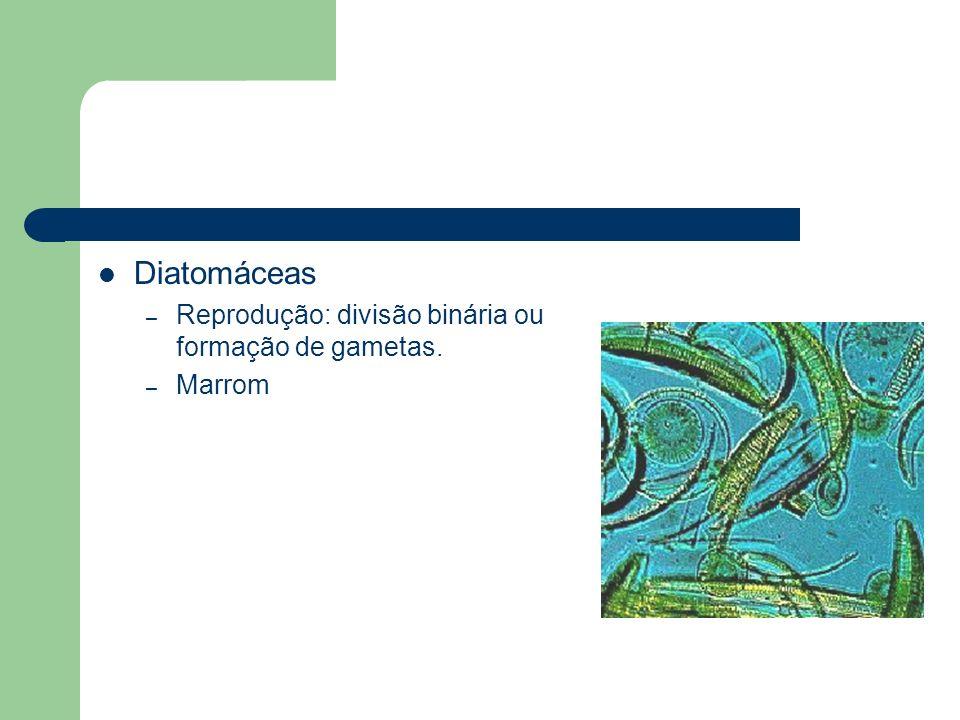 Diatomáceas – Reprodução: divisão binária ou formação de gametas. – Marrom