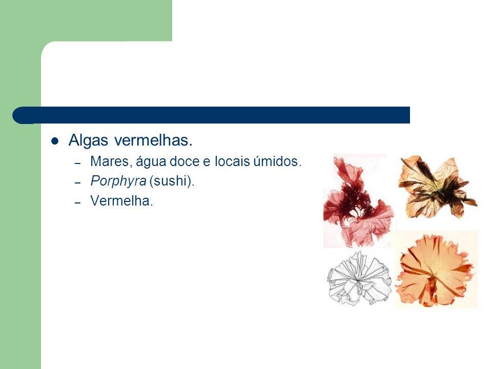Algas vermelhas. – Mares, água doce e locais úmidos. – Porphyra (sushi). – Vermelha.