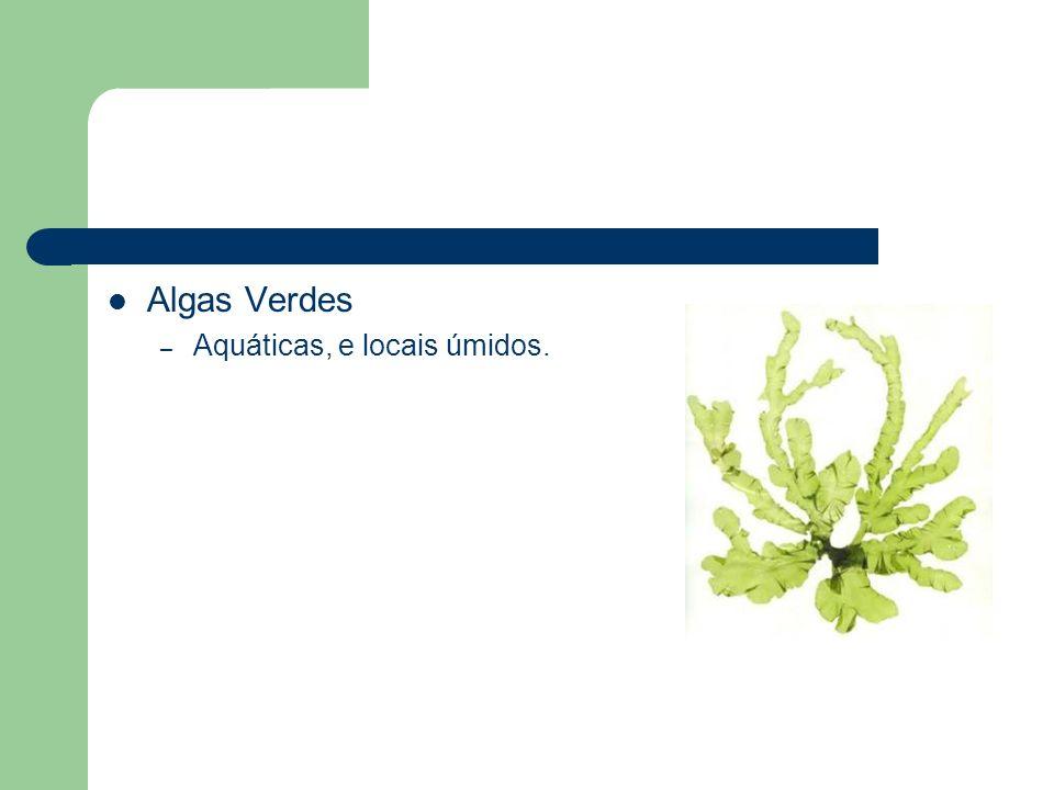 Algas Verdes – Aquáticas, e locais úmidos.