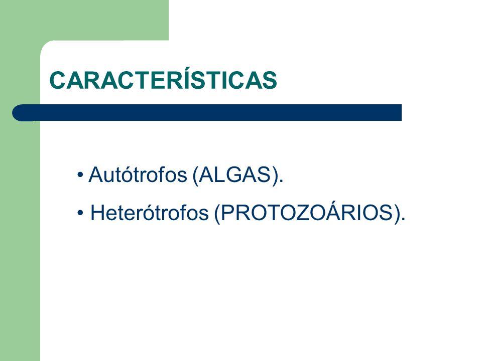 Autótrofos (ALGAS). Heterótrofos (PROTOZOÁRIOS). CARACTERÍSTICAS