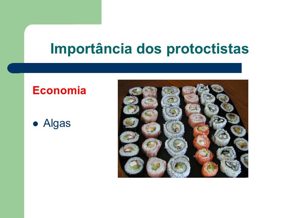 Importância dos protoctistas Economia Algas Alimento Indústria