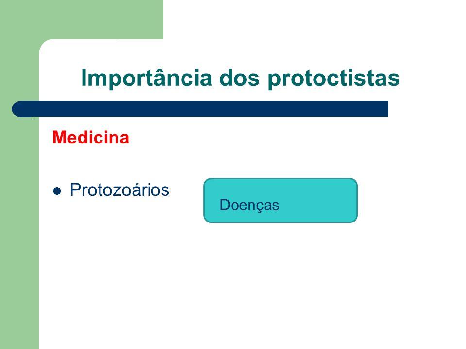 Importância dos protoctistas Medicina Protozoários Doenças